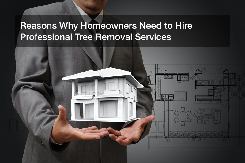 Reasons Why Homeowners Need to Hire Professional Tree Removal Services