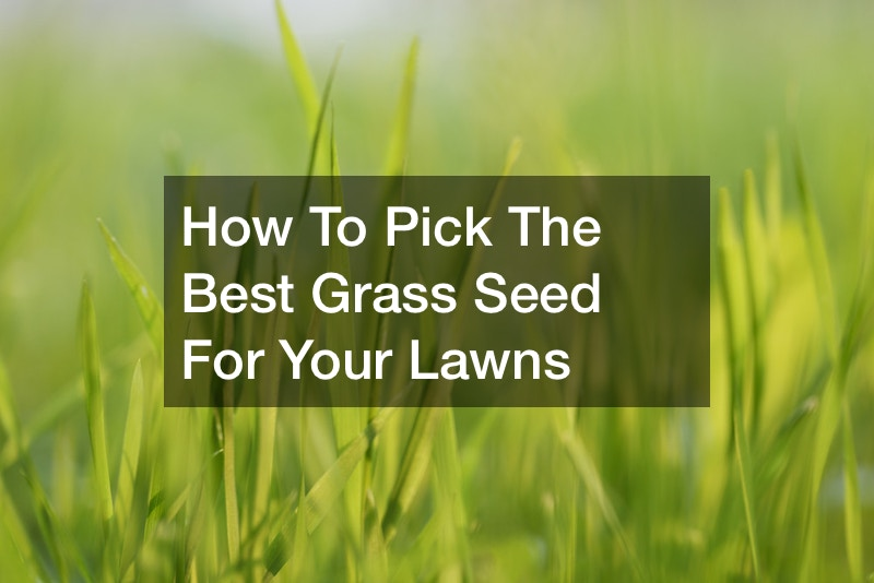 How To Pick The Best Grass Seed For Your Lawns